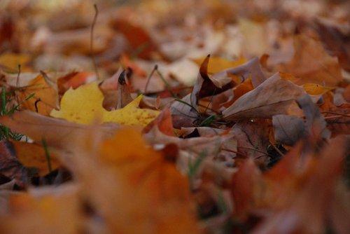 Fall-fall2