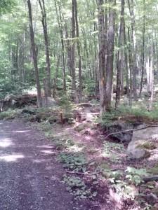 Turning trail (768x1024)