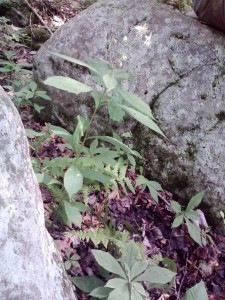 plants (768x1024)