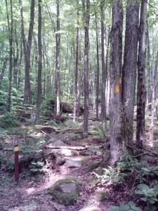 trail turn (768x1024)