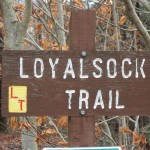 Loyalsock Trail Pic