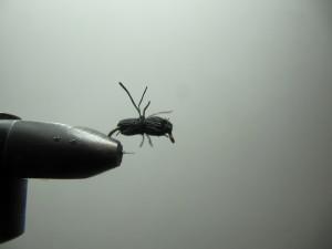 Elk Hair Beetle-Number 3 Image